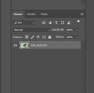 Focus-Stacking Bildbearbeitung - Ebenenansicht nach dem Reduzieren