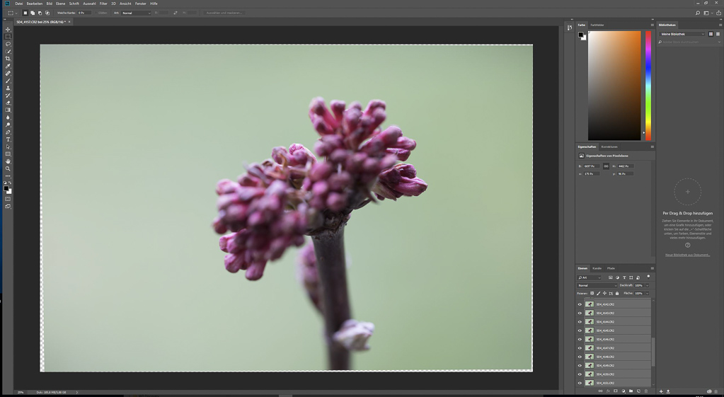 Focus-Stacking Bildbearbeitung - Ergebnis der Ebenen-Ausrichtung