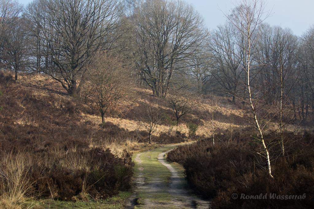 Heidelandschaft De Meinweg