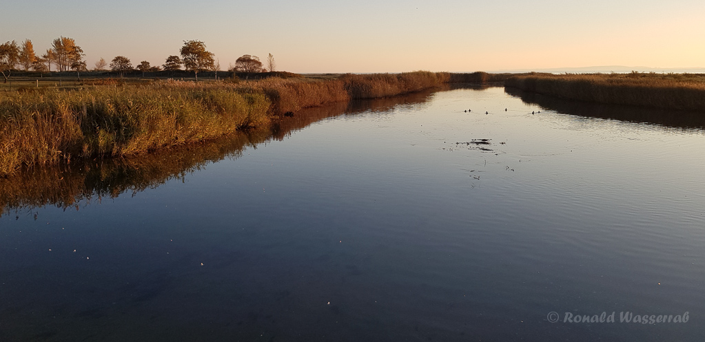 Am Sehlendorfer BinnenseerBinnensee