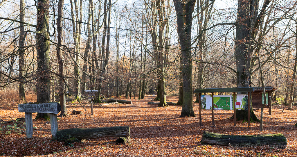 Eingang Urwald Sababurg