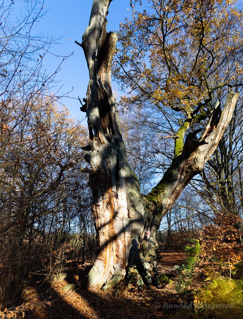 Ich vor der Wappeneiche Urwald Sababurg