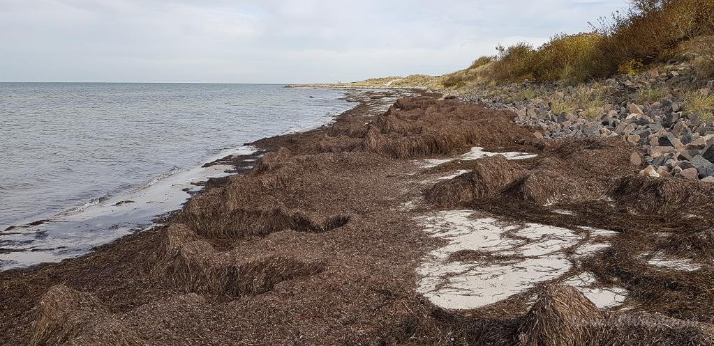 Strandabschnitt mit Seegras am Bottsand