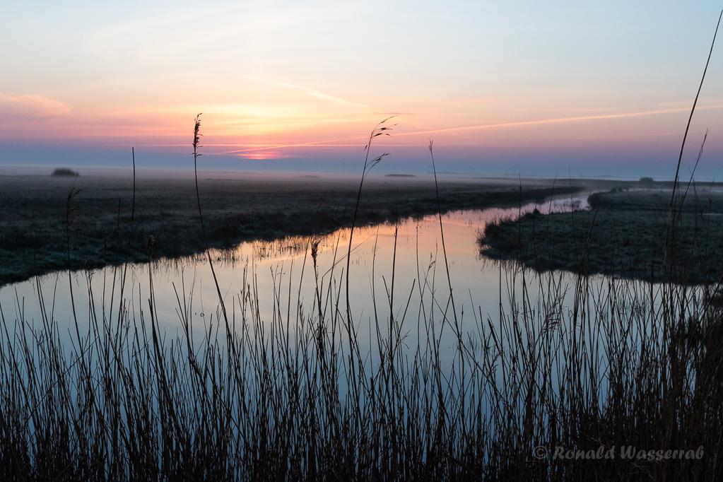 Sonnenaufgang im Kampfläufer-Brutgebiet