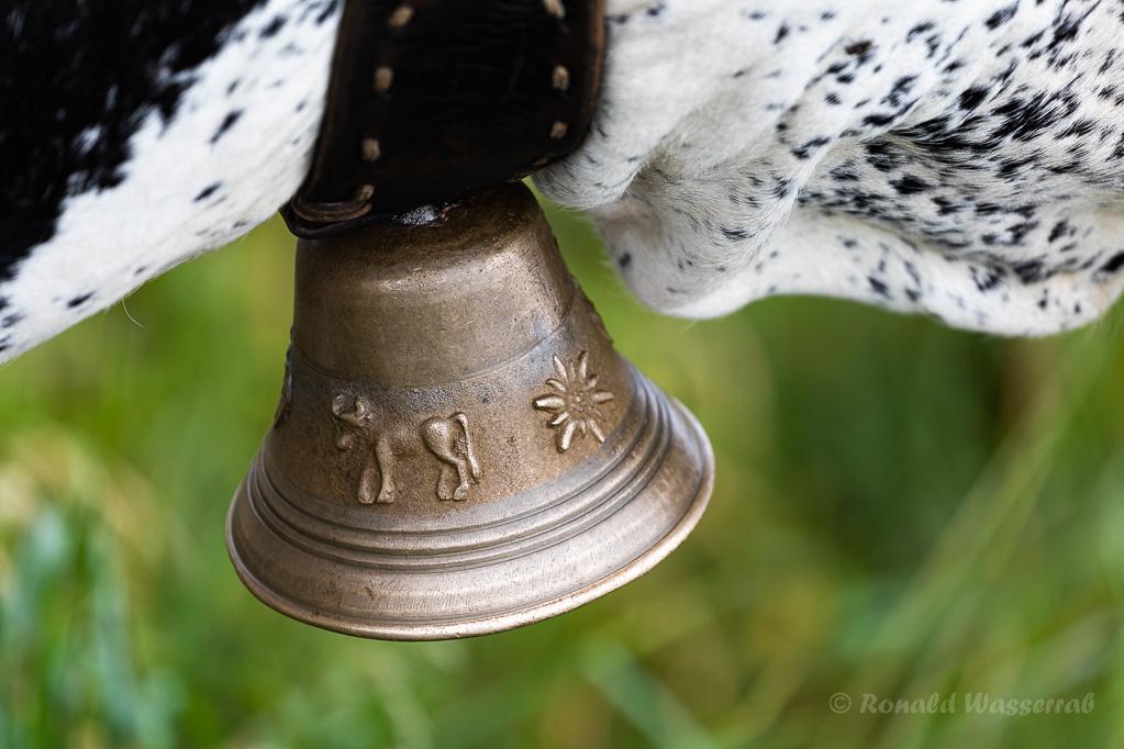 Glocke eines Vogesenrinds am Hohneck