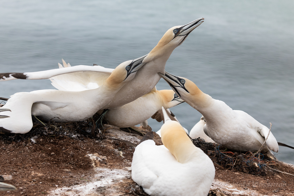 Prügelszene auf Helgoland