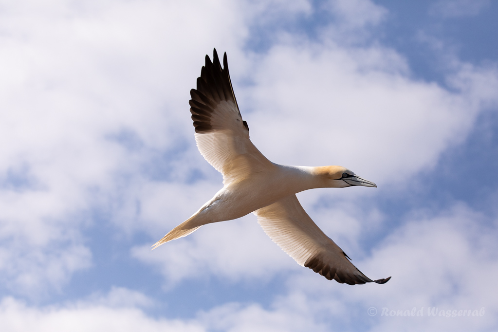 Anflug auf Helgoland