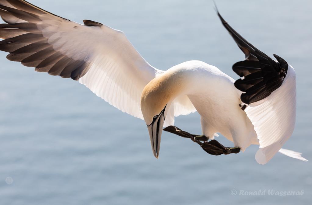 Landeanflug auf Helgoland