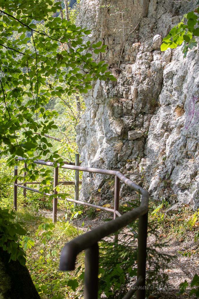Grillenjäger - Auf dem Alpenbockpfad Beuron