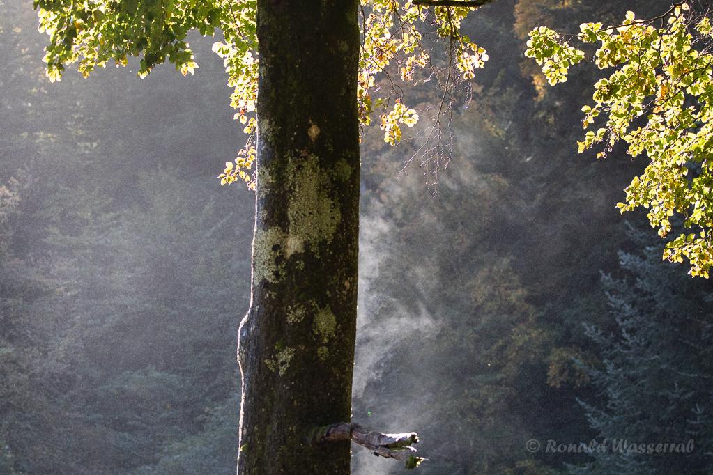 Dampfender Baum in Triberg