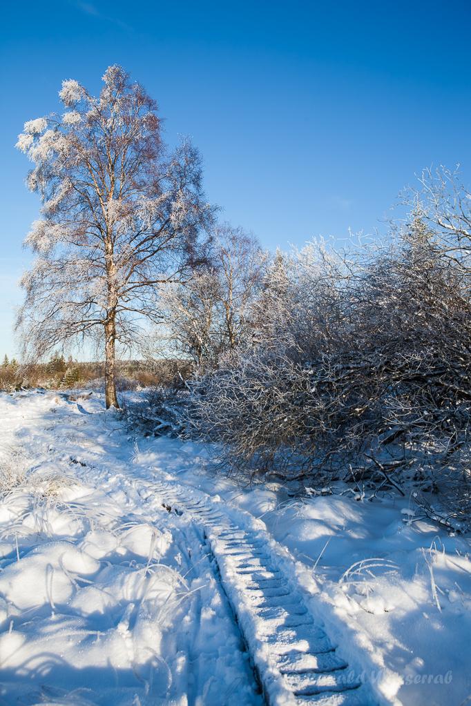 Schneelandschaft im Brackvenn