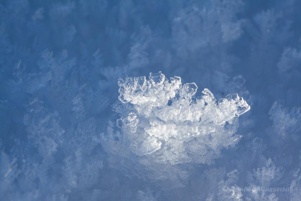 Eiskristalle im Tiefenhäuserner Moor bei Höchenschwand