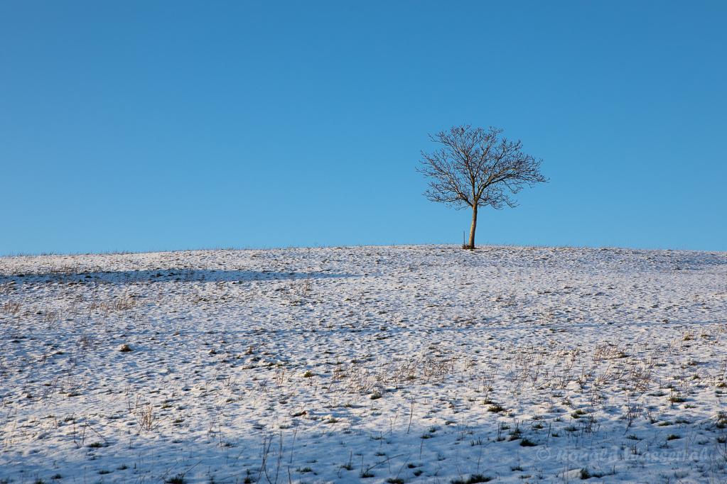 Einsamer Baum am Weg zur Kapelle