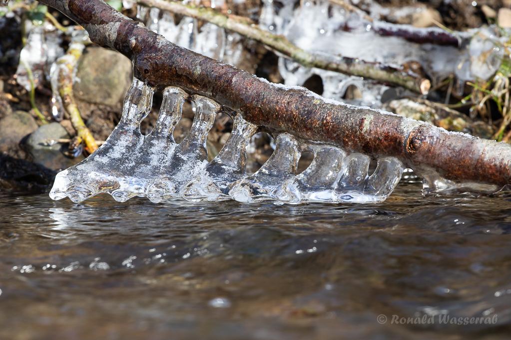 Eisformationen - Ast mit Eisgebildenin der Kall