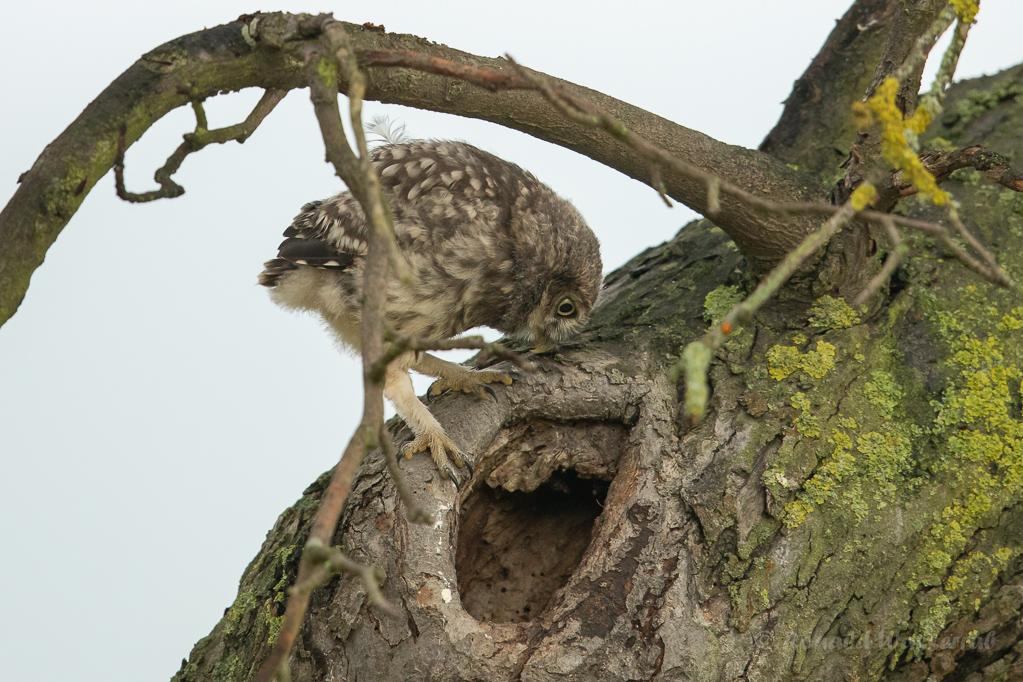 Zurück in das sichere Nest