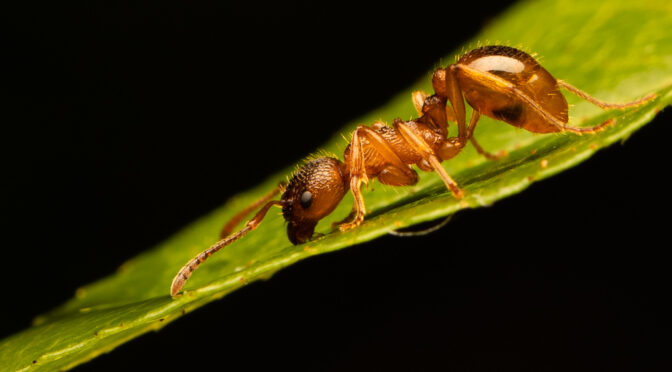 Ameisen fotografieren – Wie ich es mache
