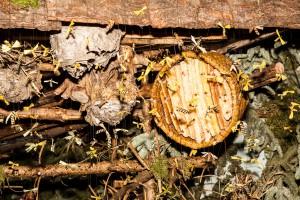 Bienenkorb in der Landschaftskrippe Höfen