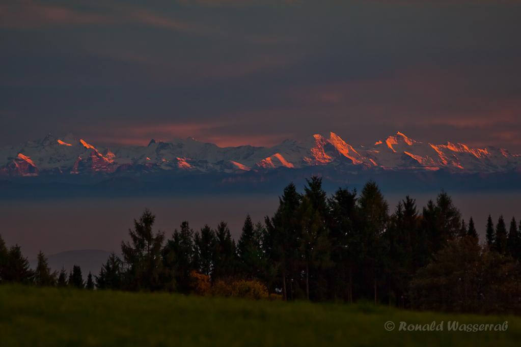 Alpenglühen von Höchenschwand aus beobachtet