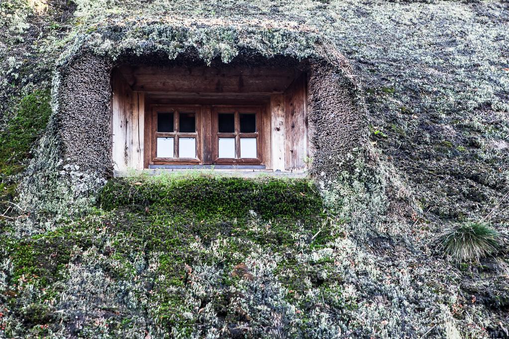 Altes Fachwerkhaus mit Reetdach in Höfen - Dachfenster