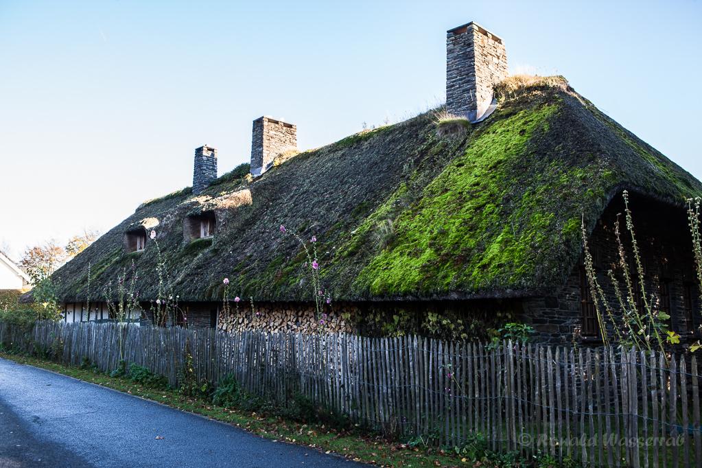 Altes Fachwerkhaus mit Reetdach in Höfen