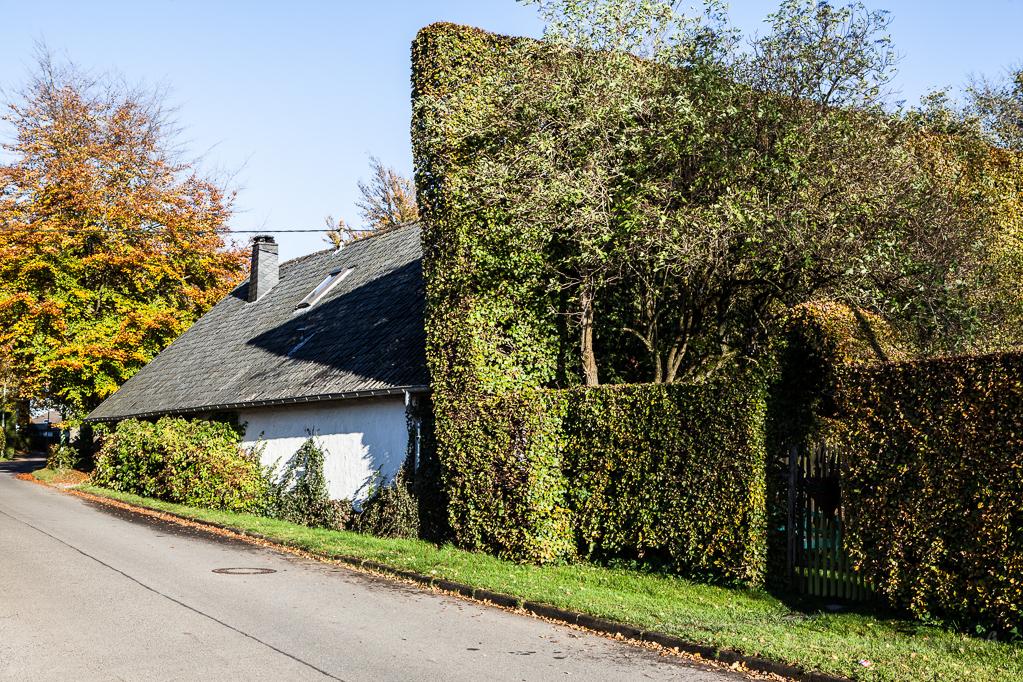 Heckenland - Fachwerkhaus mit großer schräger Hecke in Höfen