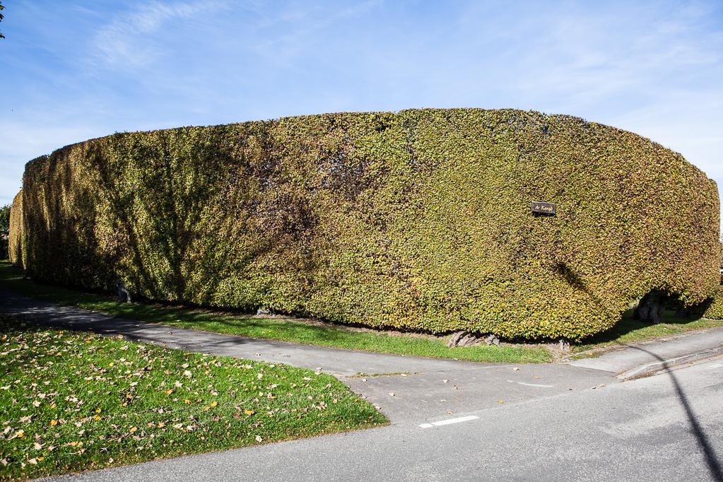 Heckenland - Hecke mit Krümmung in Eicherscheid