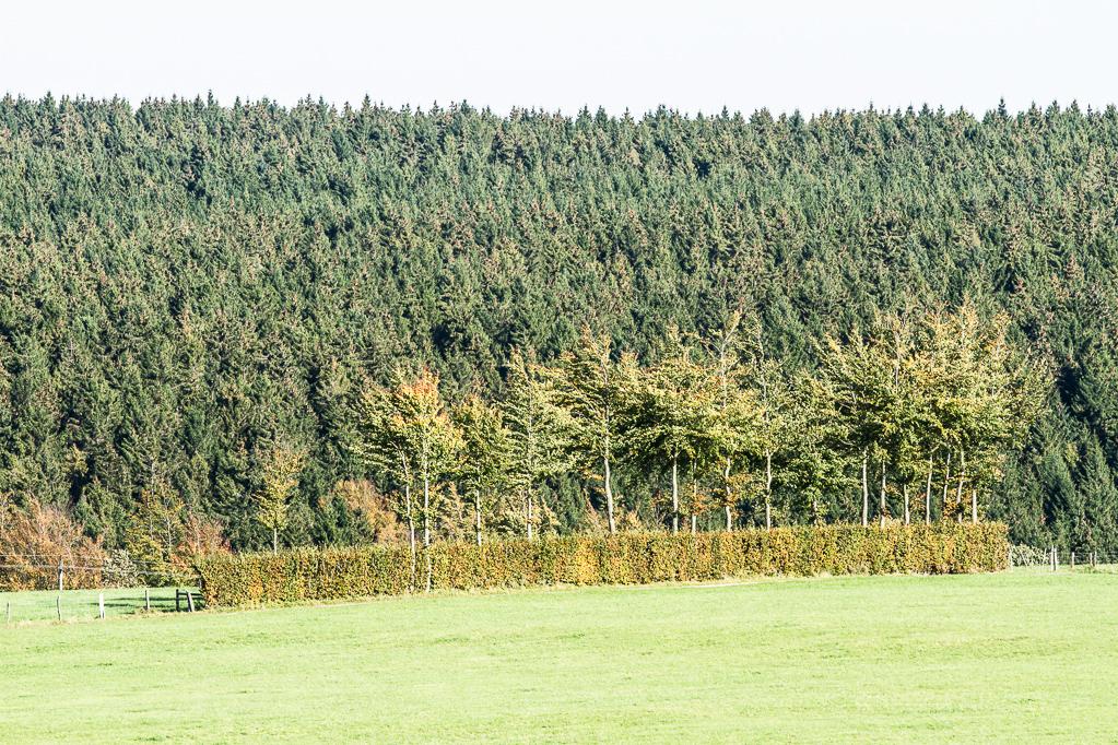 Heckenland - Hecke auf Weide zwischen Rohren und Höfen