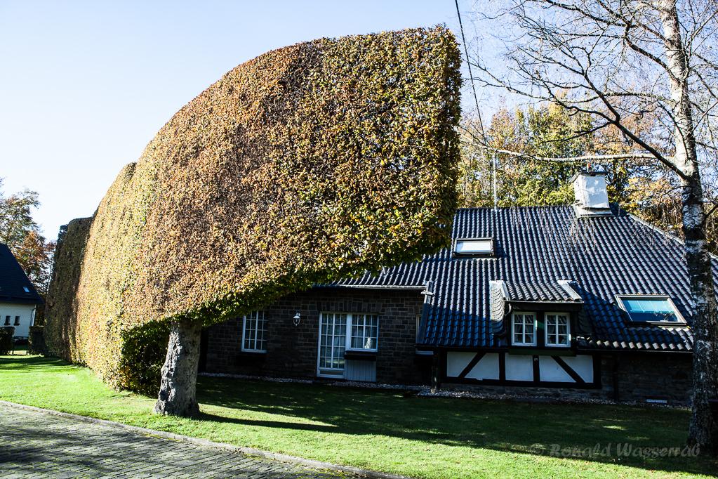 Heckenland - Hecke mit Aufwärtsschwung an Haus in Höfen