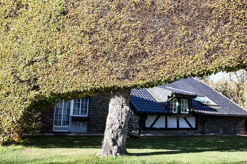 Heckenland - Hecke mit Aufwärtsschwung und Haus in Höfen