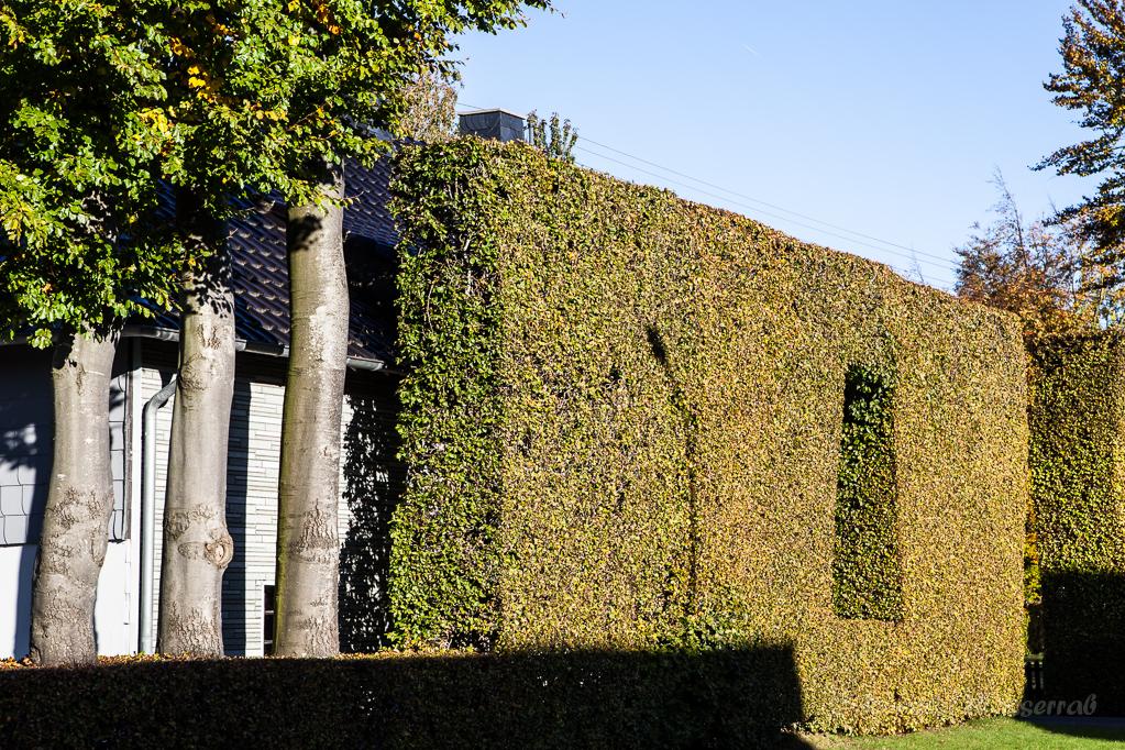 Heckenland - Hecke mit Bäumen und Ausschnitt in Höfen