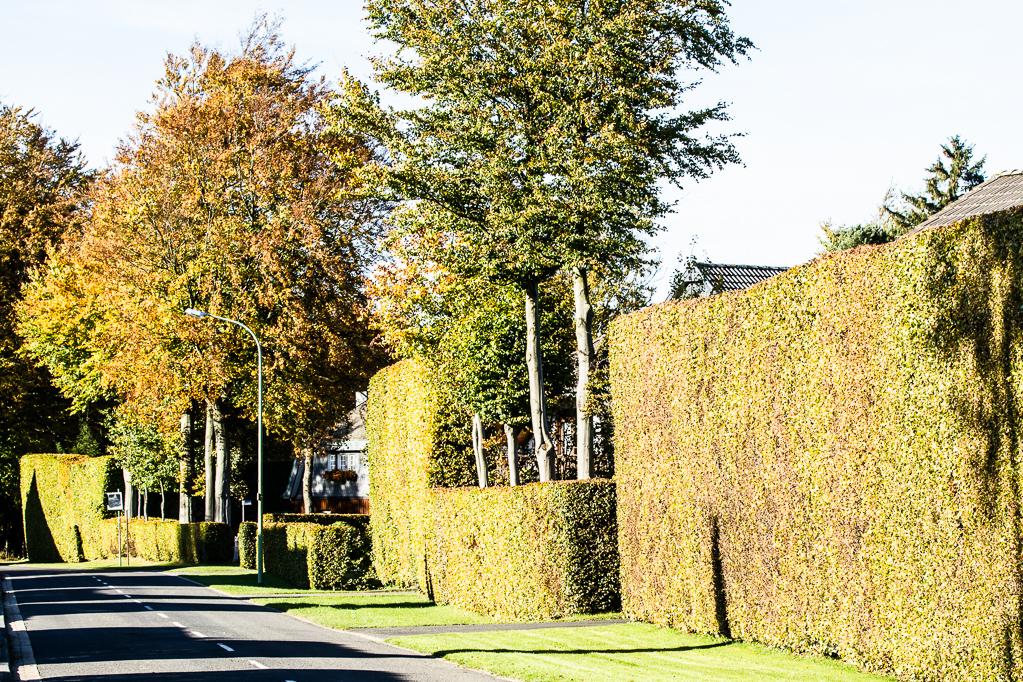 Heckenland - Hecke mit Bäumen und Fensterausschnitt in Höfen