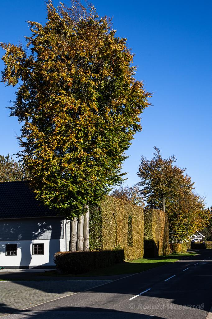 Heckenland - Hecke mit Bäumen und Fenstern in Höfen
