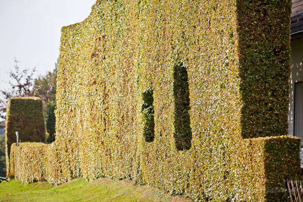 Heckenland - Hecke mit Fensterausschnitten in Eicherscheid