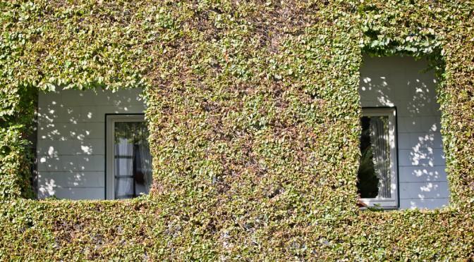 Heckenland - Hecke mit Fenstern und Ausschnitten in Eicherscheid