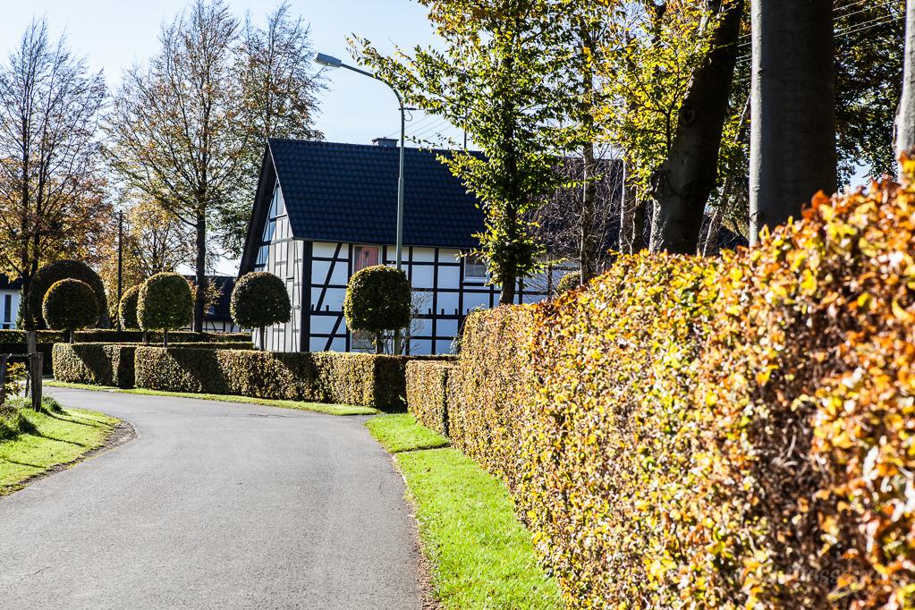Heckenland - Hecke mit Pudelbäumchen in Höfen