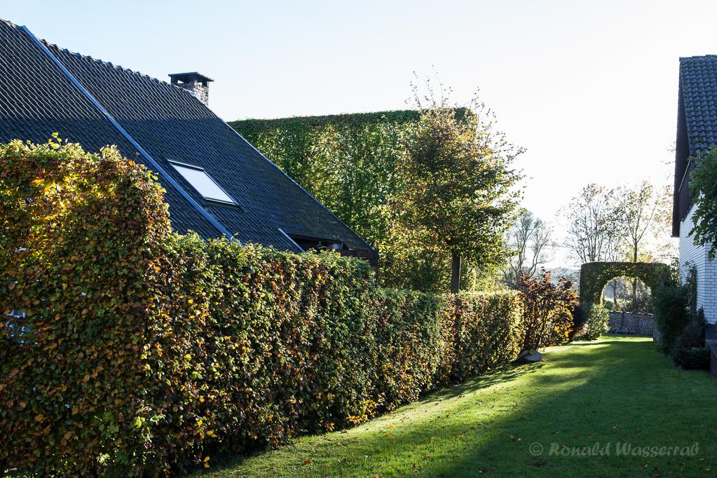 Hecke und Hecken-Tor im Hof in Höfen