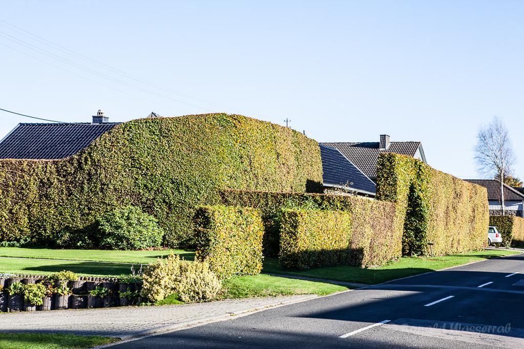 Heckenland - Komplizierte Hecke in Höfen