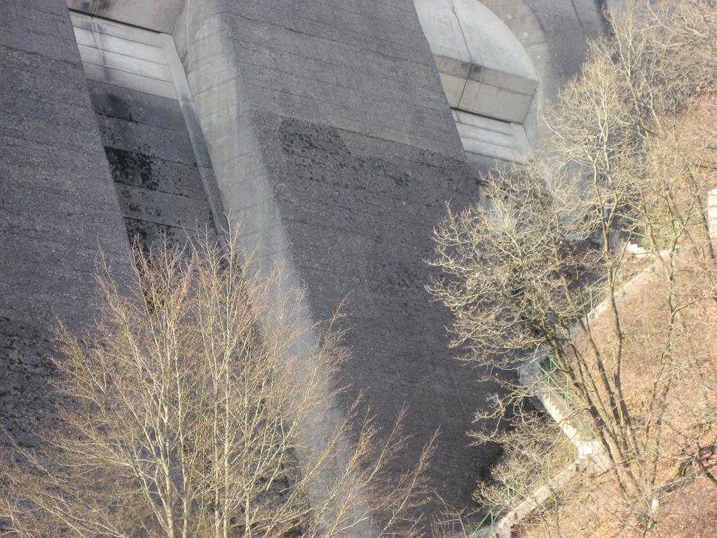 Eichhörnchen an der Olefstaumauer in Hellenthal