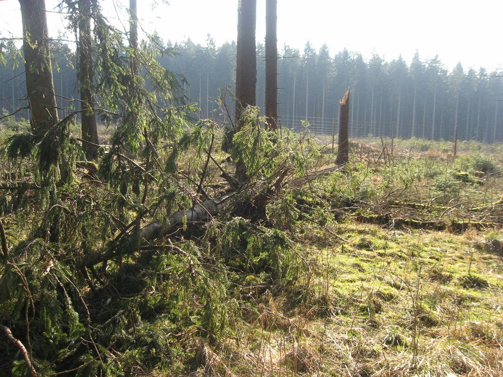 Opfer des Sturmtiefs Niklas