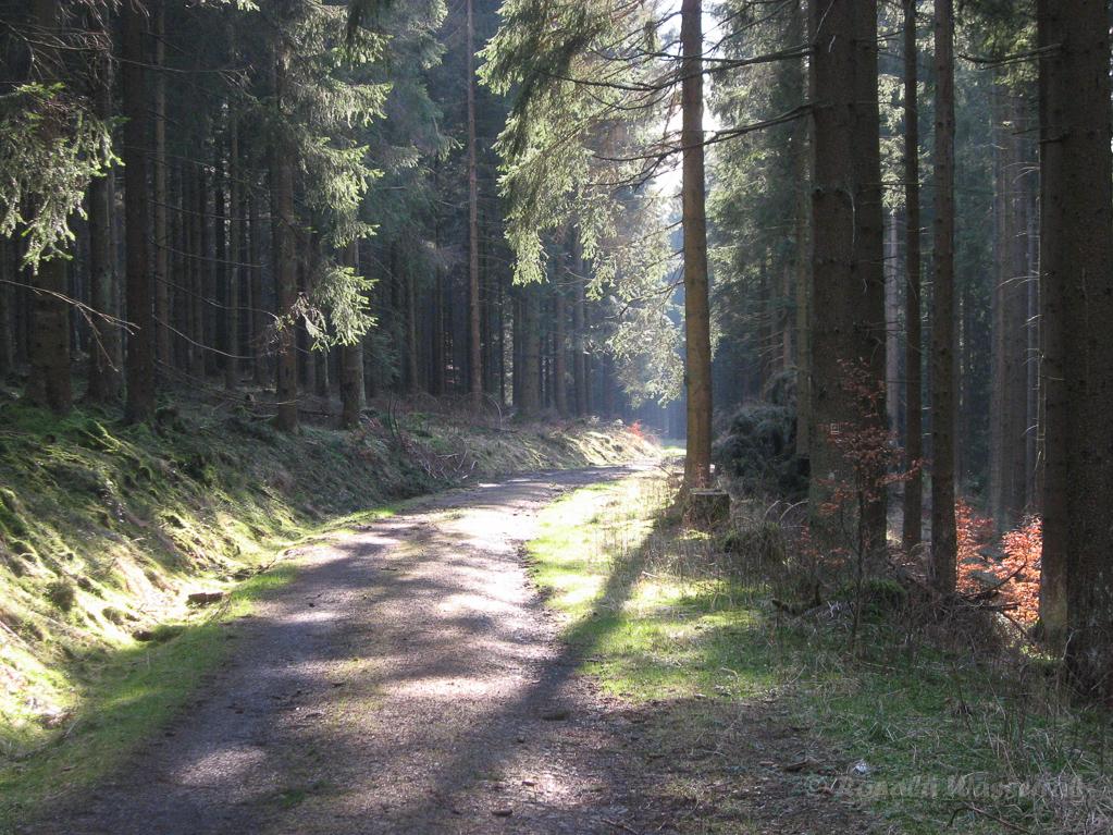 Weg in das Oleftal