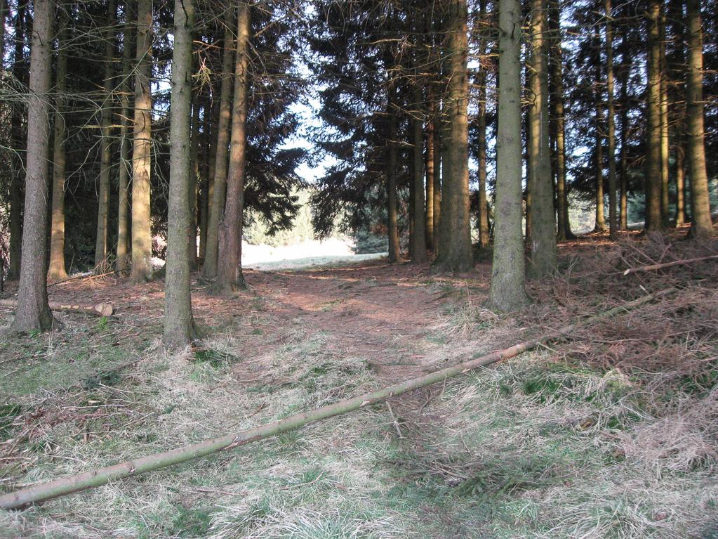 Weg durch ein Waldstück an der Narzissenwiese