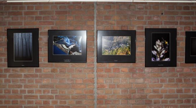 Bilder im Foyer
