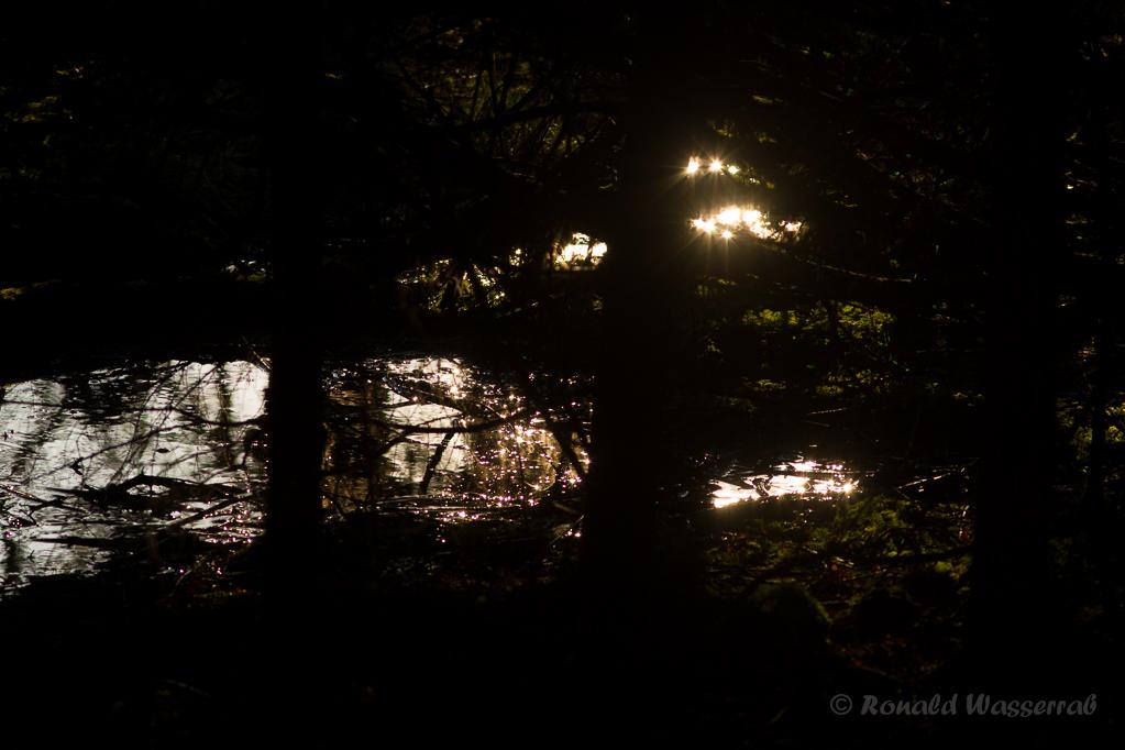 Abendsonne im Jansbach