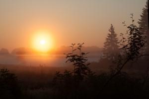 Morgenstimmung im Kranzbruch - die Morgensonne hat sich durch den Nebel gekämpft