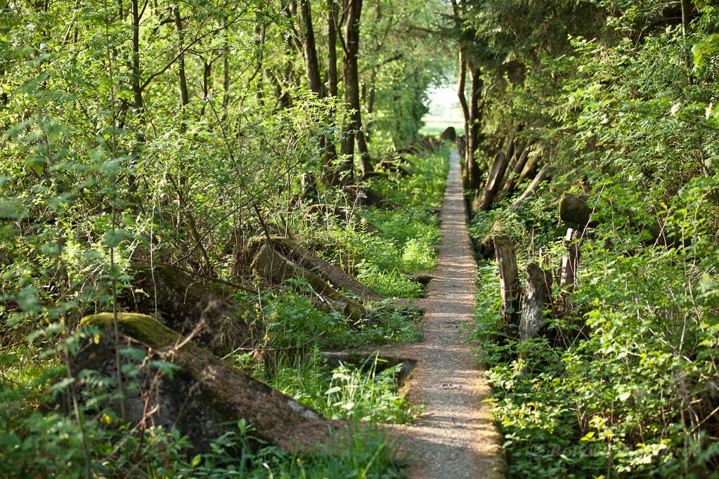 Westwallweg zwischen Bickerath und Simmerath