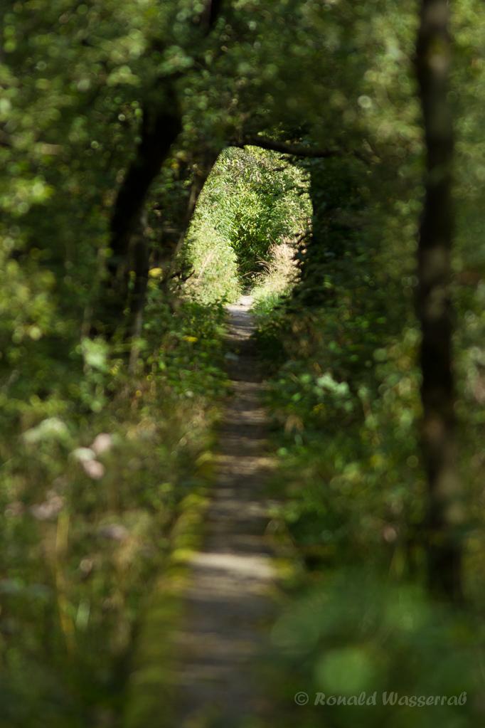 Westwallweg im Kranzbruch bei Simmerath