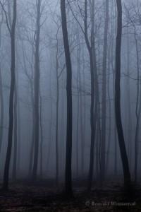 Baumstämme im Nebel