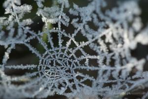 Spinnennetz mit Raureif am Hexenplatz